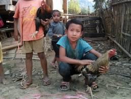 Combat de coqs à Ban Phounlak