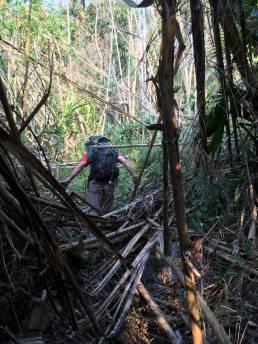 Chemin exploratoire vers Go Tham